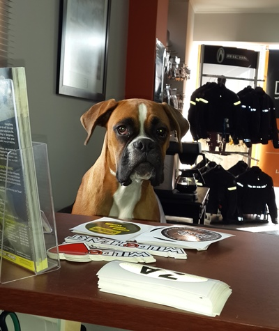 Chilli the Boxer - Wild@Heart Mascot